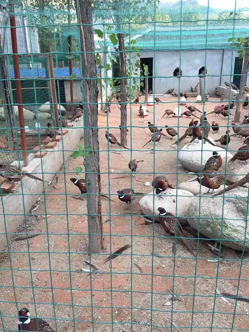 养鸡围栏网