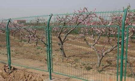 果园围栏网